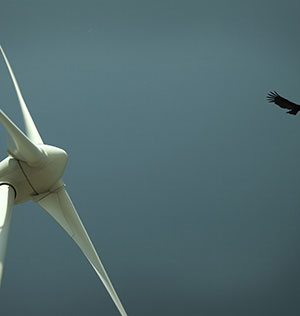 EIMS Energy Wind turbine